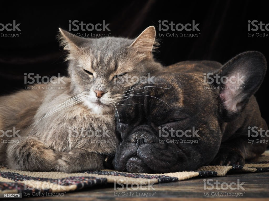 Dog and cat sleeping together cute hugging each other стоковое фото
