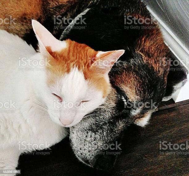 Dog and cat sleeping together picture id453561885?b=1&k=6&m=453561885&s=612x612&h= 89bwlodbzcmnu1vu ub y4vvdxfxhsadbb47qe7wjk=