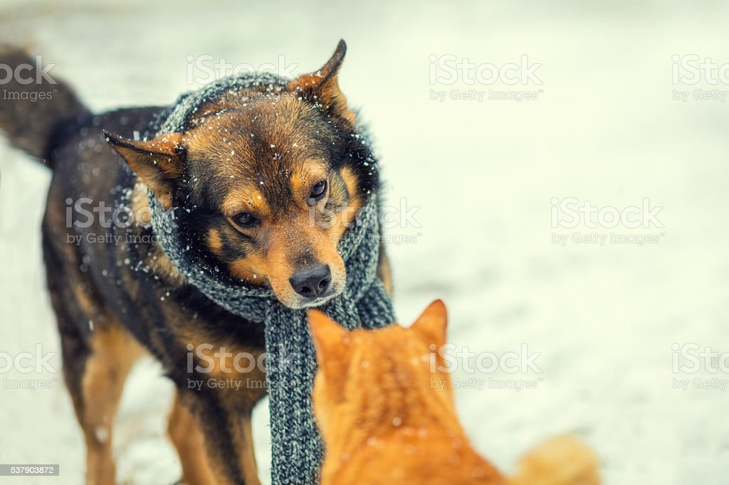 dog and cat sniffing each other in winter stock photo