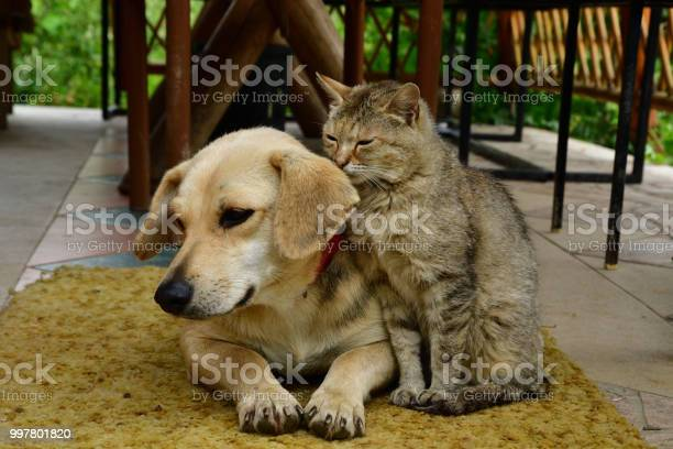 Dog and cat to lie in sorrow in their eyes picture id997801820?b=1&k=6&m=997801820&s=612x612&h=ddvffygsph6jpnzim60po sb3jtu mviu4qauhj94dw=