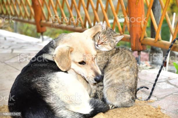 Dog and cat to snuggle in animal love best friends picture id1063312422?b=1&k=6&m=1063312422&s=612x612&h=mh9cfkntpn398hqwe24se2aqheizqzhfoqmgcf77uqo=