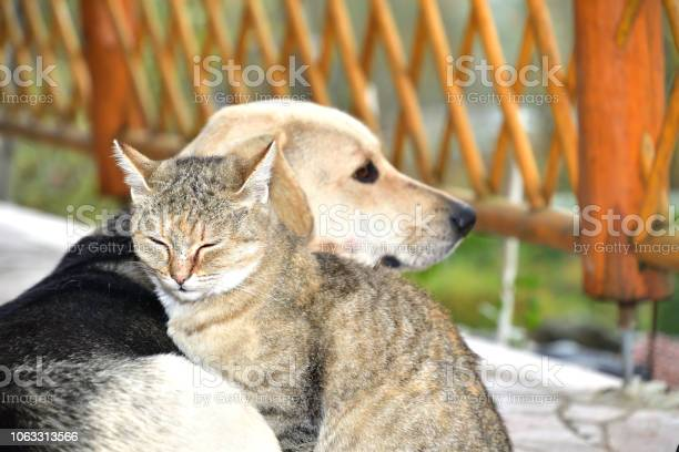 Dog and cat to snuggle in animal love best friends picture id1063313566?b=1&k=6&m=1063313566&s=612x612&h=fyxq uqouejowbpljot22nov3agzrml7rvabh1sk9pk=
