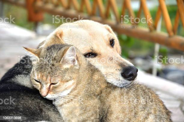 Dog and cat to snuggle in animal love best friends picture id1063313698?b=1&k=6&m=1063313698&s=612x612&h=x2d1ya03wiskwkr swqgav1j4z4v1na  kwop2jay 0=
