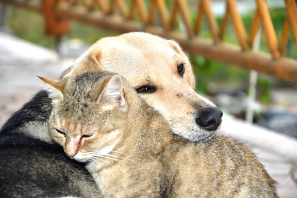 Dog and cat to snuggle in animal love best friends stock photo
