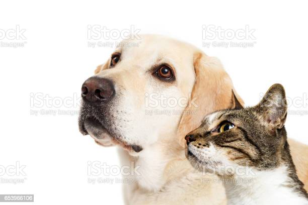 Dog and cat together closeup looking side picture id653966106?b=1&k=6&m=653966106&s=612x612&h=2c3sy3p4qyh6thnp9gxnycf164nmp9ywx5jt9nremmq=