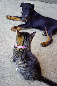 istock Dog and cat together in love 1266866629