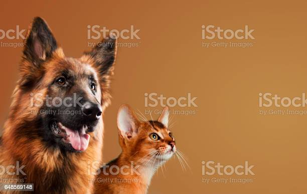 Dog and cat together on brown background picture id648569148?b=1&k=6&m=648569148&s=612x612&h= z5qoqgkmf acvsrole5aj5m0hgokxukxwapxwe2ses=