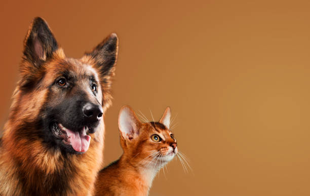 Dog and cat together on brown background picture id648569148?b=1&k=6&m=648569148&s=612x612&w=0&h=fyhezk7fe0qlxylw7mgpda0jx1hlojkjw4fle0ibkes=
