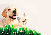 istock Dog and cat together on grass, spring concept. 646992986