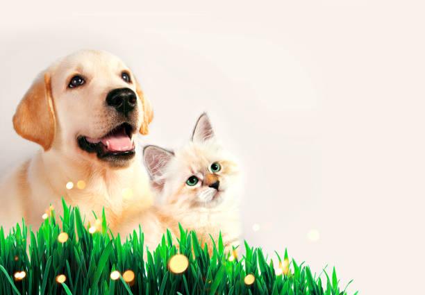 Dog and cat together on grass spring concept picture id646992986?b=1&k=6&m=646992986&s=612x612&w=0&h=3dtr ifmcr9roysybvayzkf8j9wwewqiadqj4m9xnse=