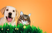istock Dog and cat together on grass, spring concept. 647053410