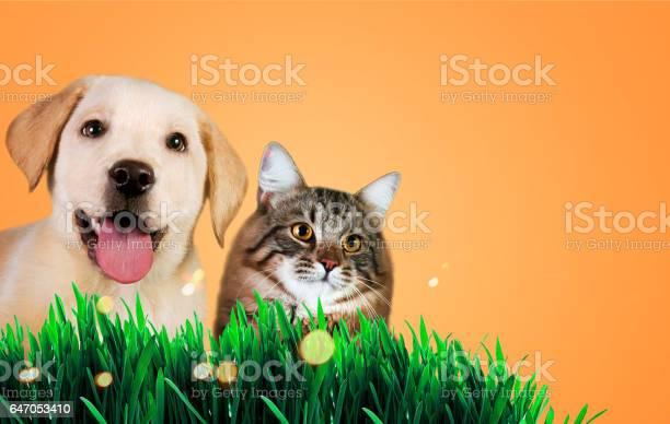 Dog and cat together on grass spring concept picture id647053410?b=1&k=6&m=647053410&s=612x612&h=okdbwvyirh2fbtq12bbtiwdiumdpnk4izijdeab0pam=
