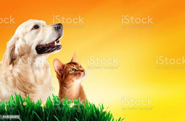 Dog and cat together on grass spring concept picture id648068952?b=1&k=6&m=648068952&s=612x612&h=u2vgshupxqm3mcet5vlklem5k4jyjjjm76ubaamrlxe=
