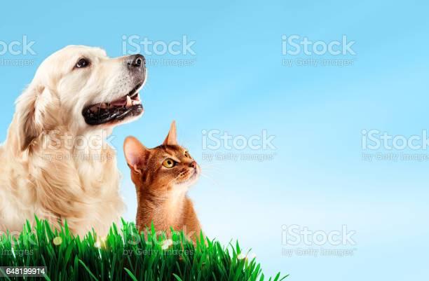 Dog and cat together on grass spring concept picture id648199914?b=1&k=6&m=648199914&s=612x612&h=2lhiezgktnhotpxgmza 15gz9tqjmadj5 se17kjni8=