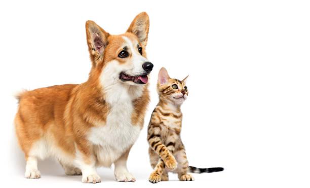 Dog and cat together picture id1235390630?b=1&k=6&m=1235390630&s=612x612&w=0&h=i5sqqvtrs3 votyc2uolhczoaxmnmjnzc5ts9ikncya=
