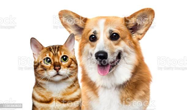 Dog and cat together picture id1235390633?b=1&k=6&m=1235390633&s=612x612&h=yrwpu1tdfqr 3ddzg9jtf5mnzqcmmu9ym4gminumcqy=