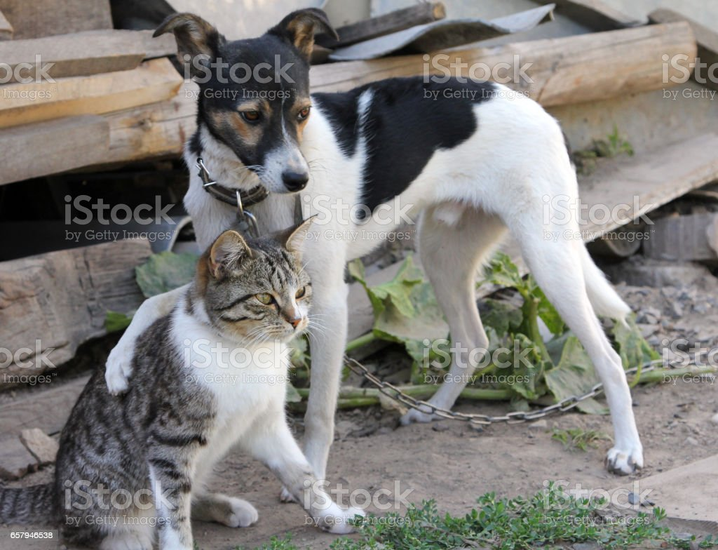 Dog and cat together foto