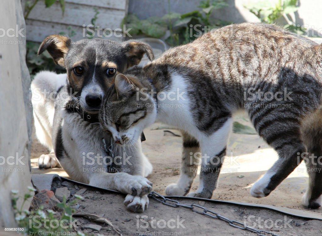 Honden en katten samen foto