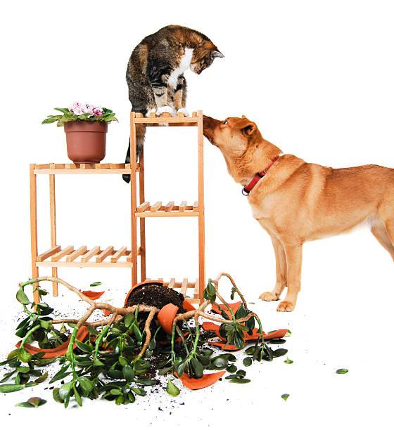 hund und katze unruhestifter gesehen - anti unordnung stock-fotos und bilder