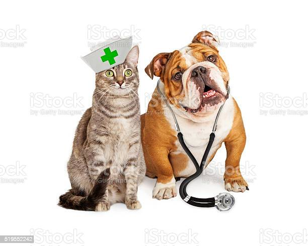 Dog and cat veterinarian and nurse picture id519552242?b=1&k=6&m=519552242&s=612x612&h=rn51bswc2ff6e qtddxo7h 0wvs oabi u hsdbcj8q=