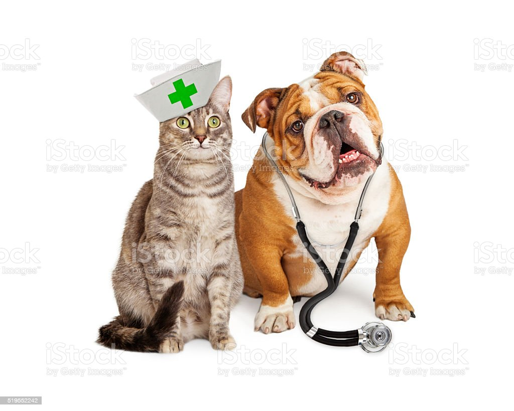 Dog and Cat Veterinarian and Nurse stock photo