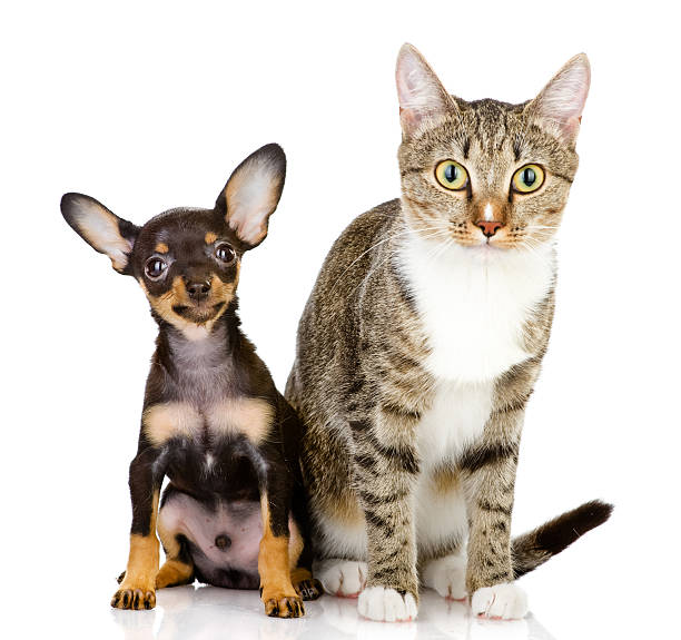 Dog and cat watchfully look in the camera picture id159140581?b=1&k=6&m=159140581&s=612x612&w=0&h=viqtsnryfz 2pnlwaumisog v ejdwcqyuw0jdzeg3u=