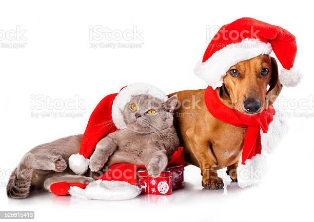 Dog and cat wearing a santa hat picture id525915413?b=1&k=6&m=525915413&s=612x612&h=millttevccn5k x eo0psx1nvu152c7vqf1wdgr6zog=
