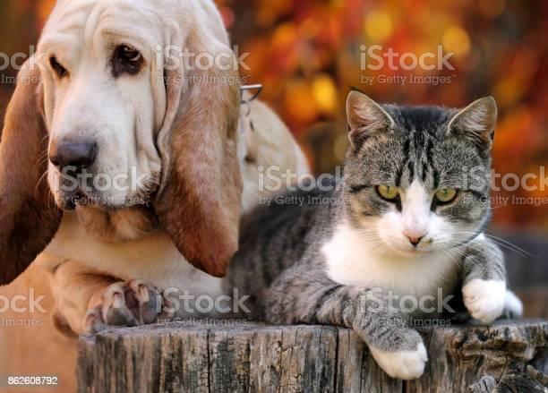 Dog and cat with autumn background picture id862608792?b=1&k=6&m=862608792&s=612x612&h= zmf9mqkgwg20ddqypuqlgzrxnfnxuyoxtashzfgw3o=