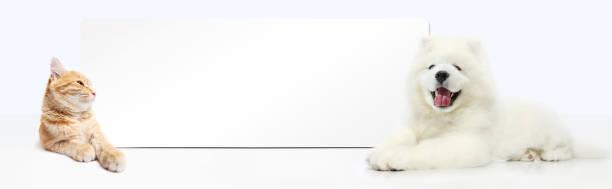 犬と猫の白い背景に分離された空白のバナーを ストックフォト