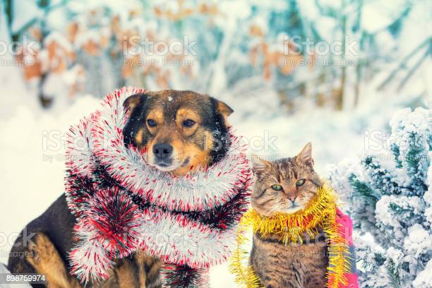 Dog and cat with christmas tinsel sitting together outdoor in a snowy picture id898759974?b=1&k=6&m=898759974&s=612x612&h= jy 8a4bp 5bjscsagumvvxazladwgimjyombntwbfy=