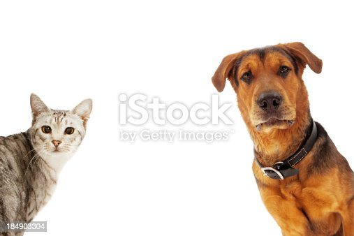 istock Dog and Cat With Copy Space 184903304
