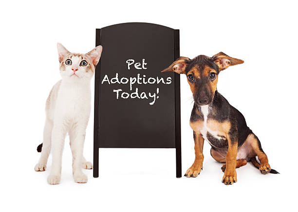 Dog and cat with pet adoption sign picture id181971579?b=1&k=6&m=181971579&s=612x612&w=0&h=ug4bx0micumpfqdjy2zh5h6hyvu5mn7gf23noifxrsu=