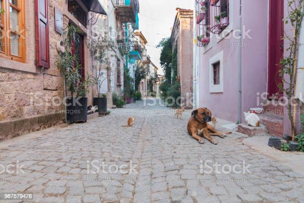 Dog and cats gang in the ayvalik old streets in turkey picture id987579476?b=1&k=6&m=987579476&s=612x612&h=yewefjwwhxf4m0jchshl6lki5gzcbfeemrrsuntu zq=