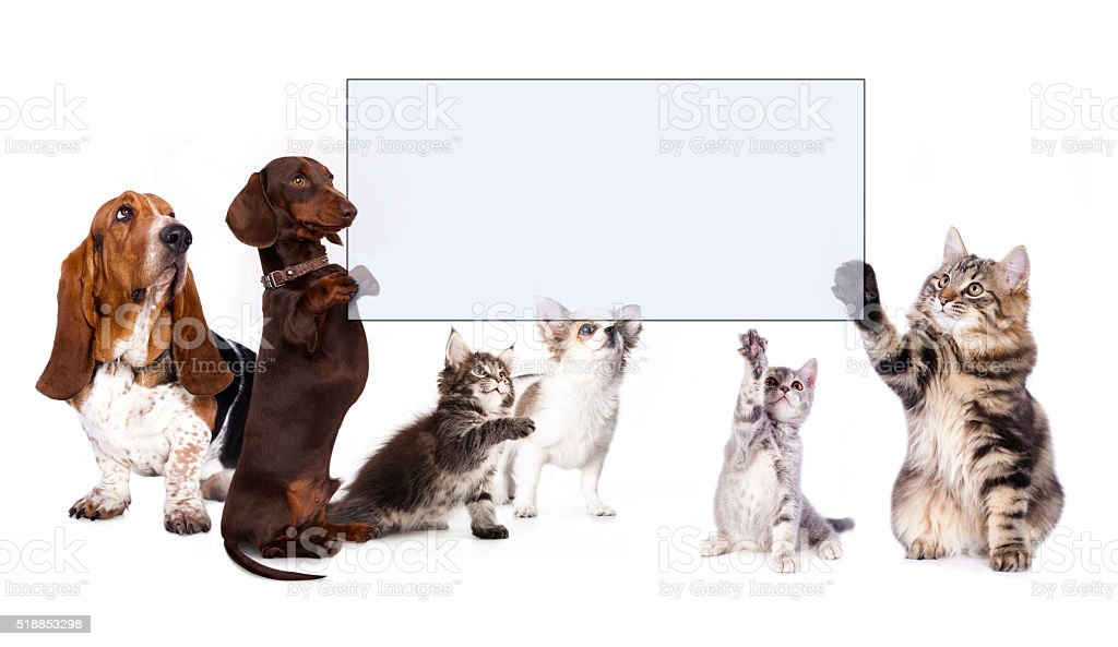 dog and cats paws holding banner stock photo
