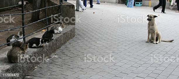 Dog and cats picture id117324472?b=1&k=6&m=117324472&s=612x612&h=0mc jwjt77vqbd71 khooeovnaix1dhvlrvnx skwzo=