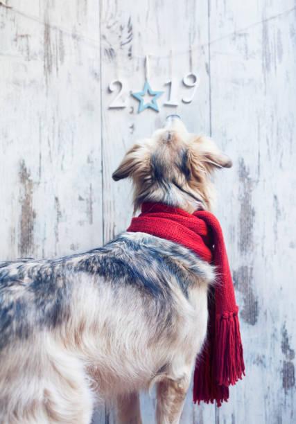 hund und weihnachten dekoration - silvester mit hund stock-fotos und bilder