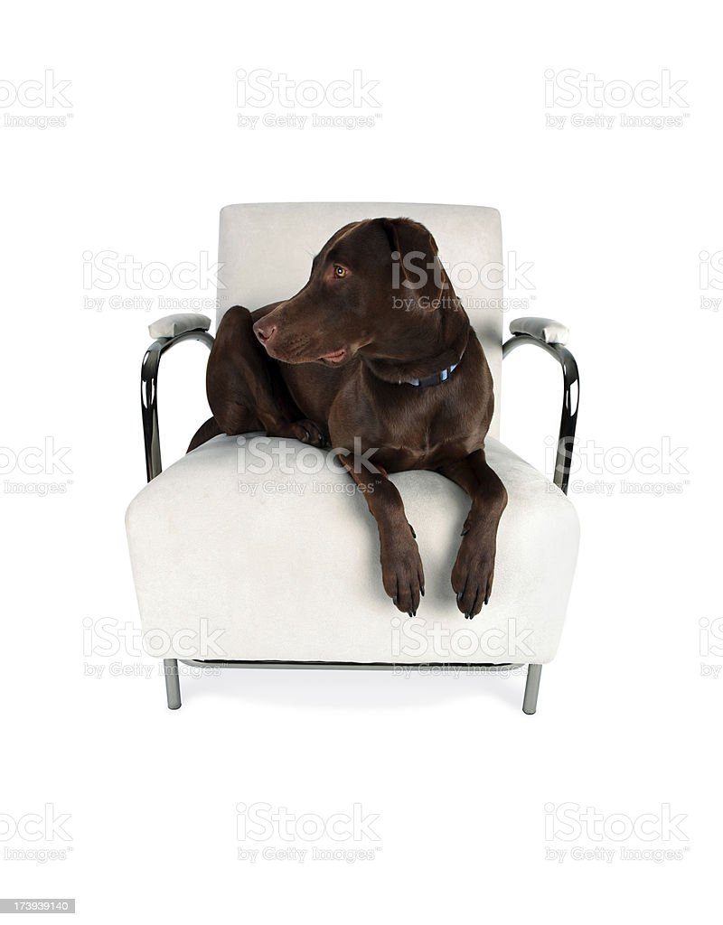 Dog and Contemporary Chair with Clipping Path royalty-free stock photo