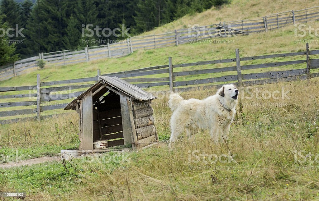 dog and doghouse royalty-free stock photo