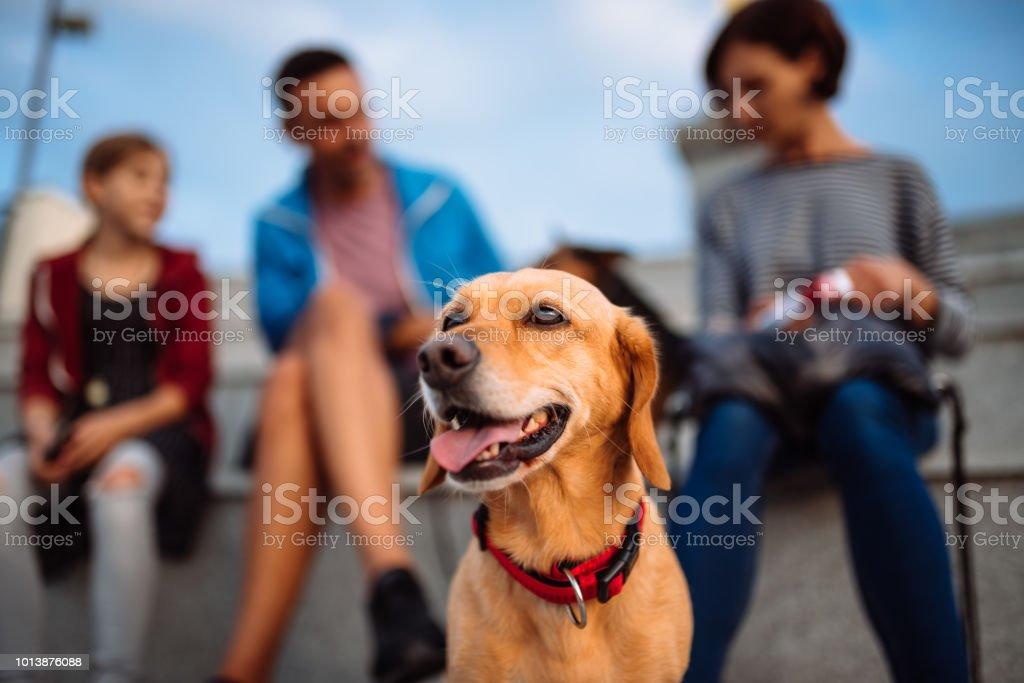 Dog and family enjoying outdoors stock photo