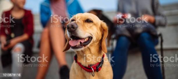 Dog and family enjoying outdoors picture id1013878116?b=1&k=6&m=1013878116&s=612x612&h=yvs17wljk hrq7nbama8eexur2yync0coagrp0xomes=
