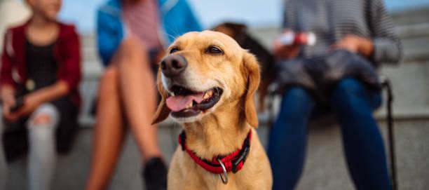 Dog and family enjoying outdoors picture id1013878116?b=1&k=6&m=1013878116&s=612x612&w=0&h=sbnaxjjs1y8v53vhdqdpk9tigbubtvl y7phdttskg8=