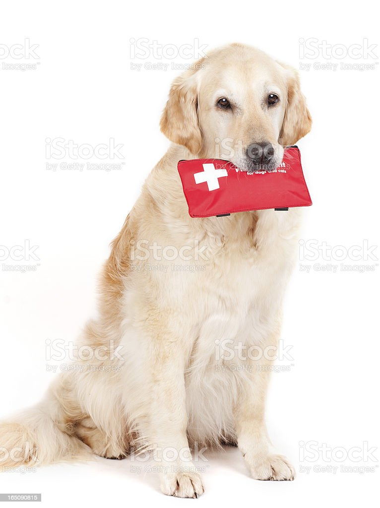 Dog and First-Aid-Kit royalty-free stock photo