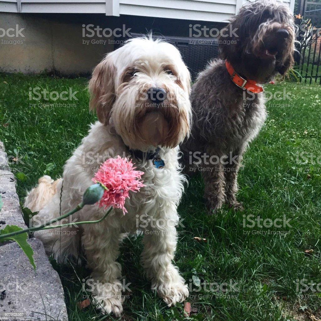 Dog and garden stock photo