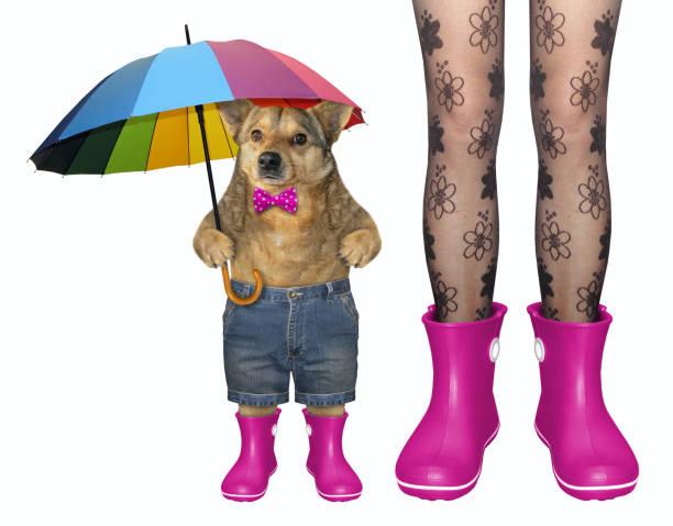 hund und mädchen in rosa gummistiefel - hunde strumpfhosen stock-fotos und bilder