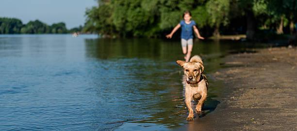 Dog and girl running along beach picture id539228618?b=1&k=6&m=539228618&s=612x612&w=0&h=zqjzj6oful2o9pv8ppkvhchmoowwspbiqwspa9efq90=