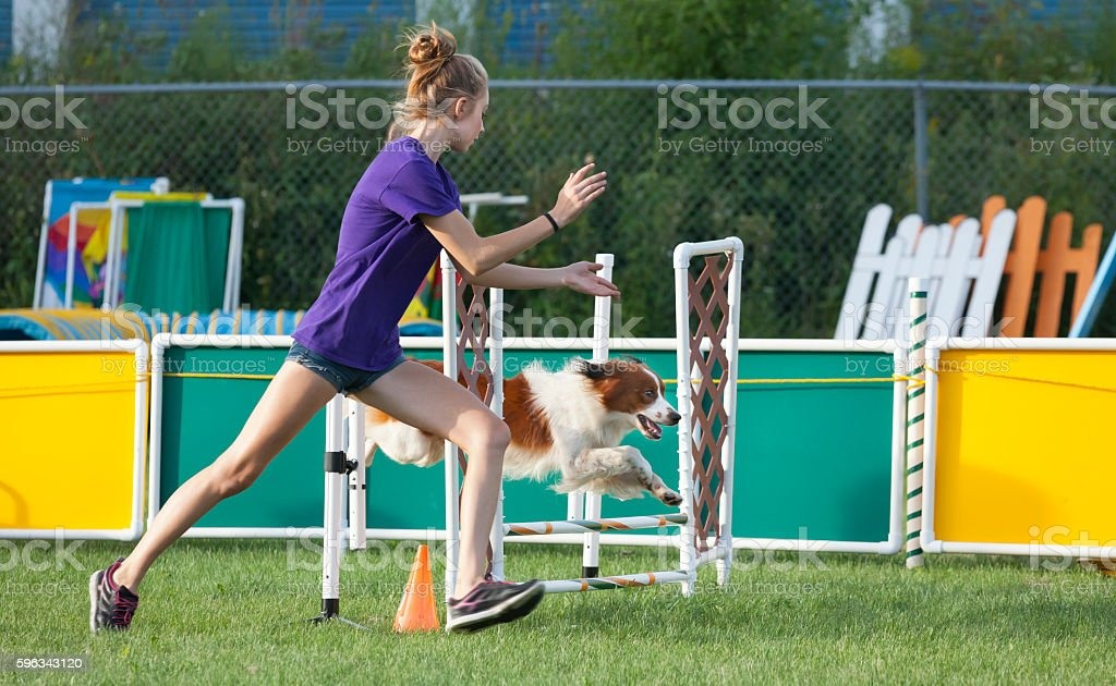 Dog and handler working together in agility competition royalty-free stock photo