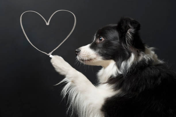 hund och hjärta form - animal doodle bildbanksfoton och bilder