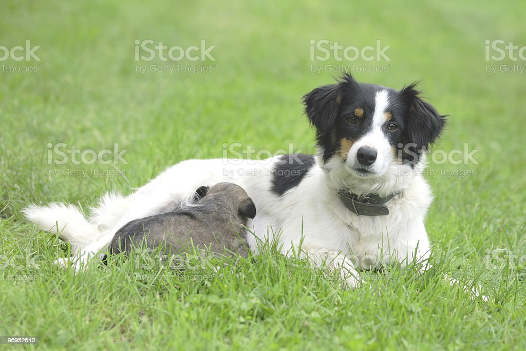 dog and her son royalty-free stock photo