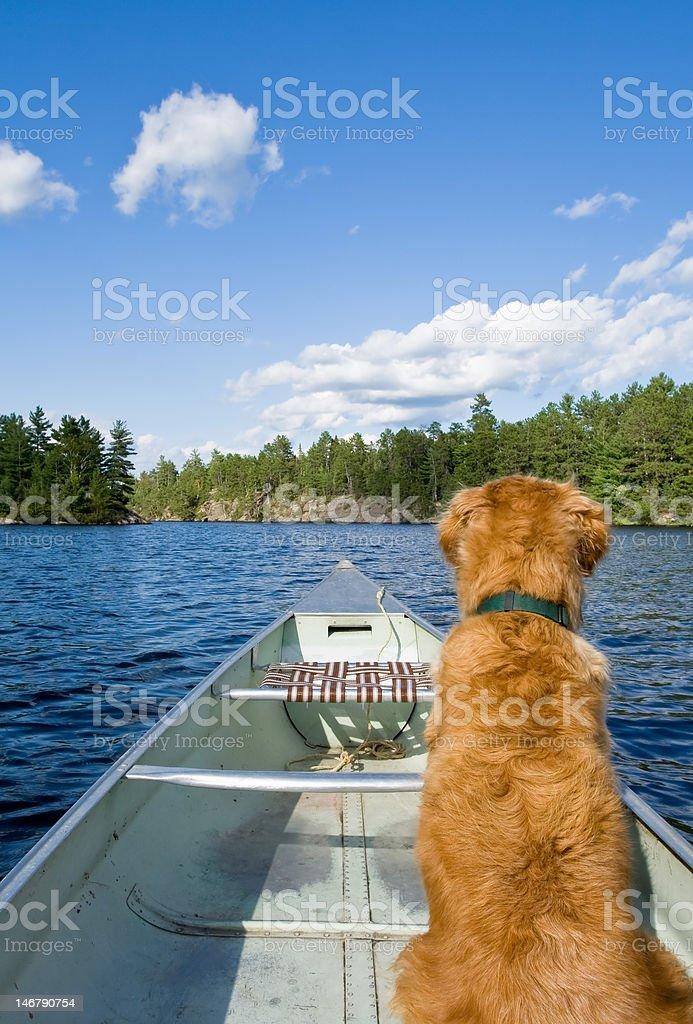 Dog and his canoe stock photo