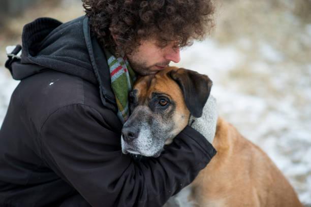 hund och hans ägare - emotionellt stöd bildbanksfoton och bilder